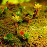 Flegma #9 (November)