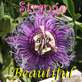 Strange and Beautiful