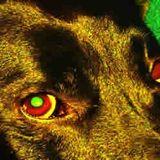 Oči psího šamana