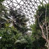 Biomass at the Blodel Conservatory Sep 8 2018