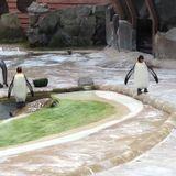 Inside the Zoo, History Pod - Part 2