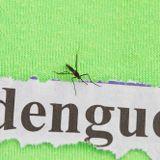 Woozy Madcap - Dengue Fever