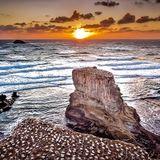 Muriwai Beach Mix
