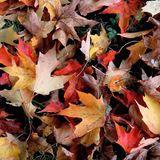 Global groove vol.2 Autumn Mix (HALU RIMIX)