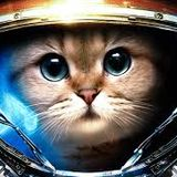 There's cats roaming this asteroid