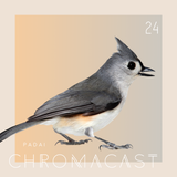 Chromacast 24 - Padai