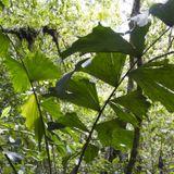 Armonía tradicional con la naturaleza--los Waorani