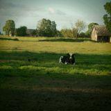 audmmix004: merelinnud - green meadows lo-fi blues mix