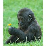 Monkey In Spring