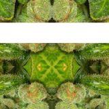 420 Mix E M P T Y dj