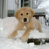 ZOE SNOWDYN FG # 392 TX 24012013