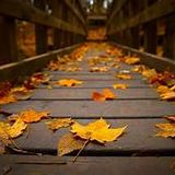 Autumn's Sole