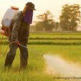 Glyphosate: l'herbicide cancérigène reçoit l'autorisation de l'Union Européenne