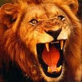 Lion Rinse
