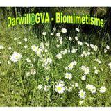 Podcast 19 - Dj mix : Darwill