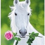 Bonehorse Valentines Special