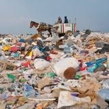 Moshki in city garbage