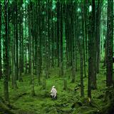 Melting forest 2 Psy Ninja mix set for morning blast..