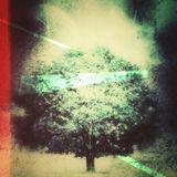 cosmic tree 2 @ plutonium klub ... salex