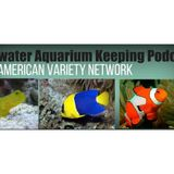 Saltwater Aquarium Hour on AVN: Introduction to Saltwater Aquarium Keeping