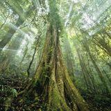 @DjMenamenasta Jungle