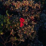 autumn romantic collection for Birdie