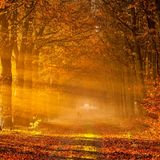 Dj LibErty - AutumnTouch #1