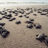 Gun violence and sea turtles: the good and bad about the USA