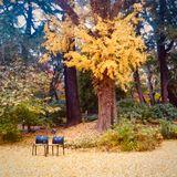 Tokyo ON #057: Thinking Autumn, Feeling Winter