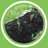 Jeanne Delaurent -  Les types de buttes en permaculture (FR)