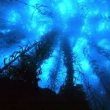 P Dee - presents - Journey Into The Abyss Prt 3 - Distinctive Music For Distinctive Minds.....4-1-15