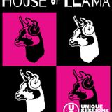 House of Llama 06.03.2019