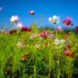 warm of spring - April mix
