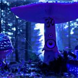 Dark Forest Psy Mix 1 2012