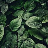 Discovering Cosmicleaf #20 by Chlorophil