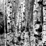 soundscapes_2013_rebwarfailli