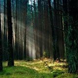 Of Forest & Men