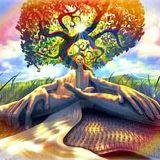 Steve Saint |Natural Progression 2 | 2014