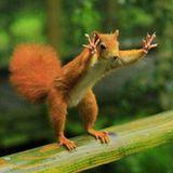 krol henriko mad squirrel mix