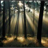 Bianco - Morning Light (Original Mix)