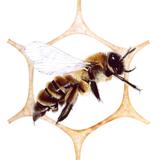 June Pollinate Part I