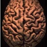 DJ Dreamz - Neurological Pulse - Zen Set [2000]