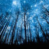 MONO-STARS