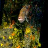 Seabreeze, OBX 2012-08-12 (part 2)