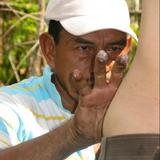 Don Pedro Guerra – Icaro Three 2006