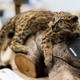 III Encuentro de Museos de Historia Natural en INVEMAR Parte DOS