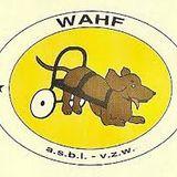 Emission 174 - La protection des animaux avec Gwenaëlle et Marion du refuge Wahf