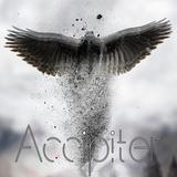 B.I.F. - Accipiter