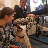 Gode råd til hunde adfærd - Besøg af Karen Frost fra hundogtraening.dk