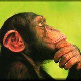 simian mixdt.ape